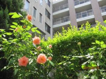 薔薇とローズガーデン建物
