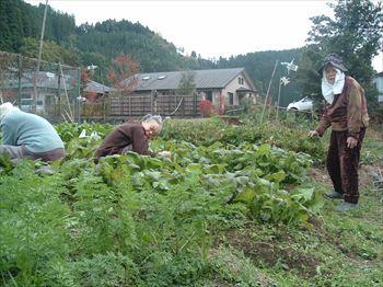 近くには畑も有り一緒に野菜を栽培しています。